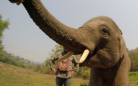 A baby elephant at a sanctuary in Chiang Mai, Thailand