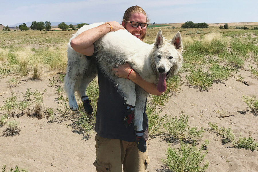 Kaytu being rescued from the piping hot sand at the Bruneau Dunes