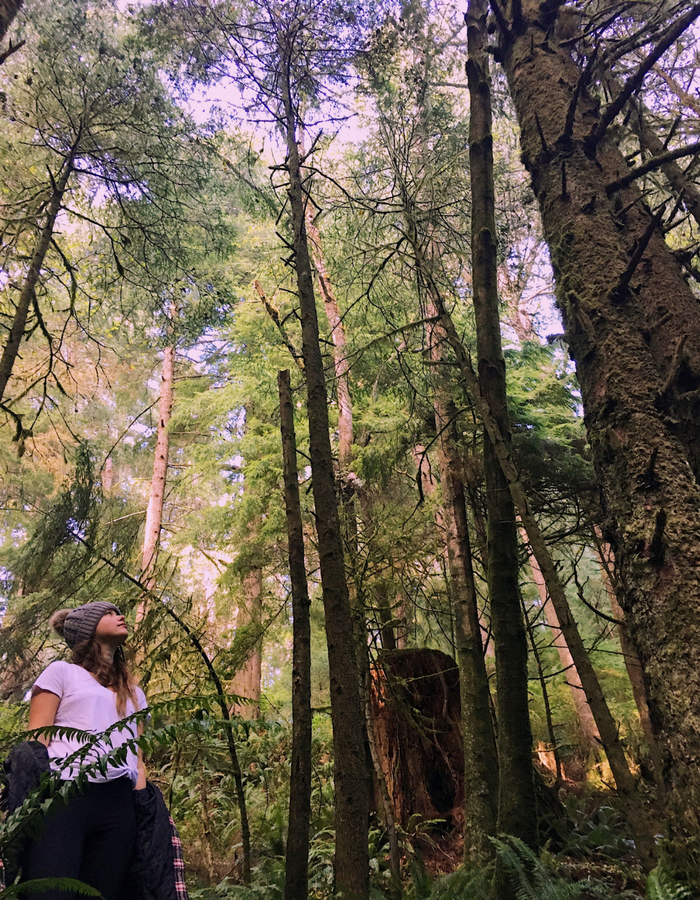 Staring up at the tree tops in Ecola State Park
