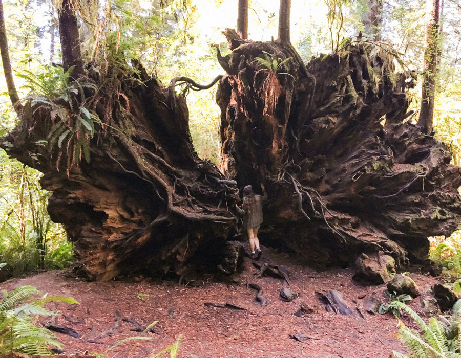 Redwoods National Park: The Ultimate 2 Day Itinerary