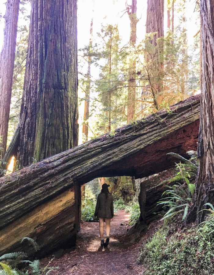 Walking through a tree tunnel on the Prairie Creek Trail in the redwoods