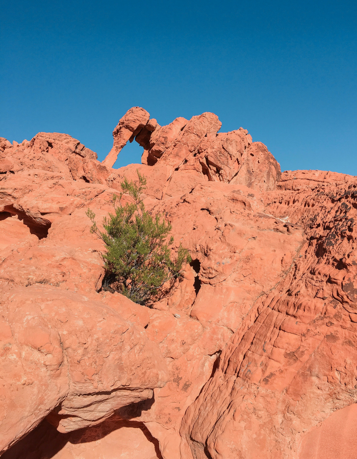 Elephant Rock in Valley of Fire State Park